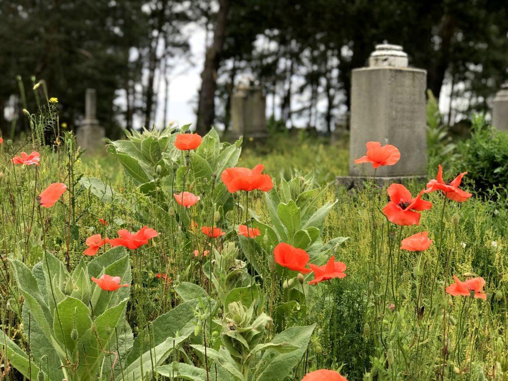 Cmentarz mennonicki w Sosnówce